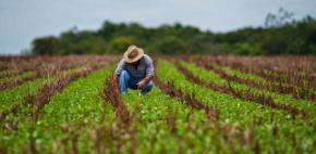 Sintap/MT homenageia Técnicos Agrícolas pelo seu dia